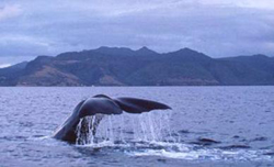Whale Watching Cruises, California